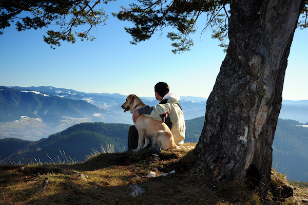 Man and golden lab sitting under a tree gazing at the mountains