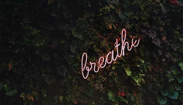 Neon sign that reads breathe against a verdurous bush.